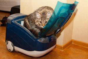Почему пылесос вызывает страх у кошек