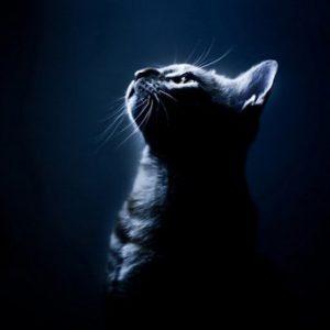 Что общего у кошки и видеокамеры ночного видения
