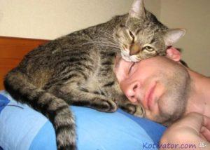 Кошки-лекари: правда или миф