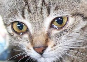 Что делать, когда кошка плачет