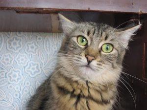 Почему кошки «стрекочут»