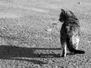 Почему кошки уходят из дома и что это значит
