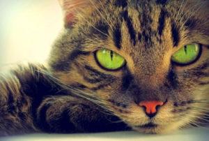 Почему нельзя смотреть кошкам в глаза