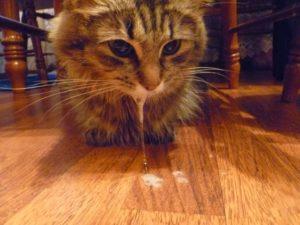 Почему появляется пена изо рта у кошки