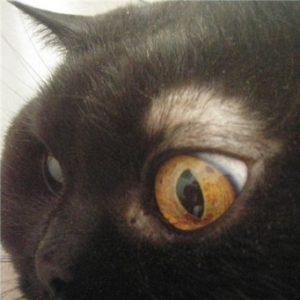 кошки над глазами залысины