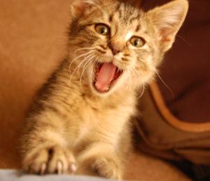 у кошки пахнет изо рта тухлятиной