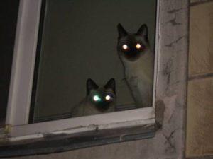 кошки светятся глаза в темноте