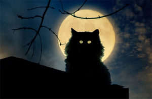 Почему у кошки светятся глаза в темноте