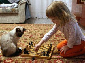 Кошки не понимают человеческую речь: верно ли мнение ученых
