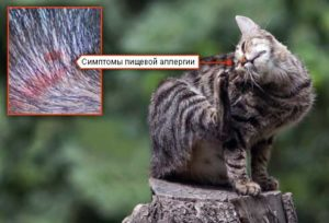 лечение аллергии на корм у кошек
