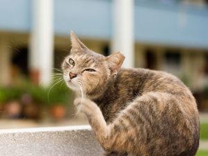 Типы аллергических реакций у кошек