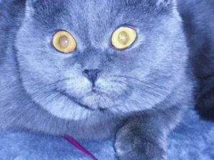 лечение коронавирусной инфекции у кошек