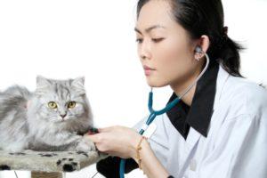 лечение отека легких у кошек
