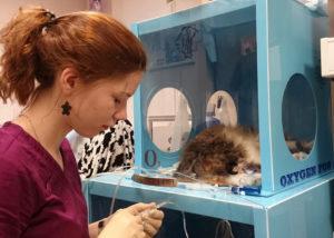 Симптомы и лечение отека легких у кошек