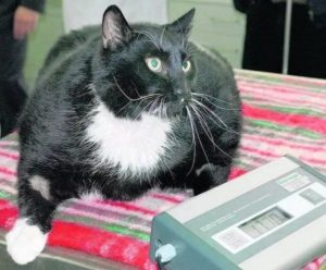 лечение сахарного диабета у кошек
