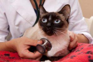 Симптомы вирусной лейкемии у кошек