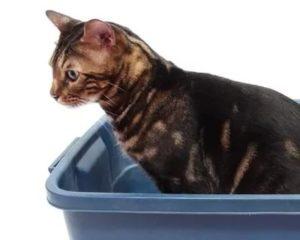Проблемы с ЖКТ у кошки: как с ними бороться