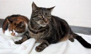 Проблемы со здоровьем у кошки, связанные с голоданием