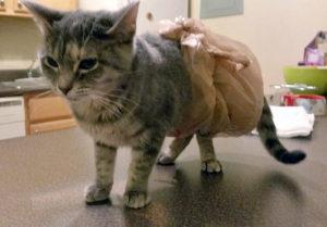 Что делать и как лечить, если у кошки понос с кровью (1)