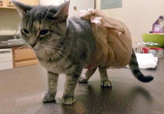 Кровяной понос у кота