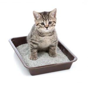 приготовить слабительное для кошек в домашних условиях