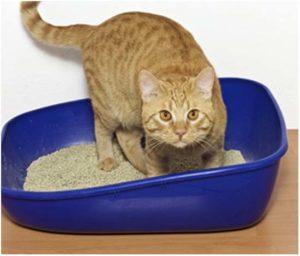 приготовить слабительное для кошек