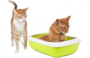 Как применять Стоп-цистит для кошек