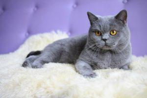 Список популярных пород котов