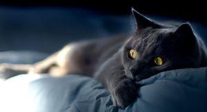 противозачаточные средства для кошек