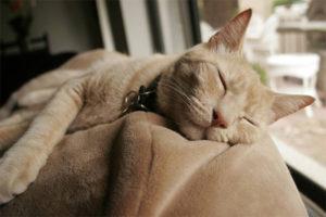 Какие существуют противозачаточные средства для кошек