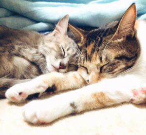 снотворные средства для кошек
