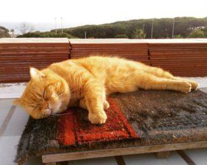 Какие болезни нервной системы бывают у кошек