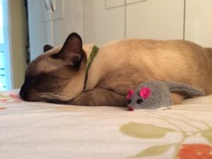 Какие выбрать успокоительные и снотворные средства для кошек
