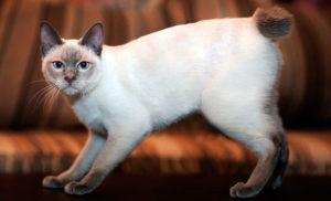 Какие есть самые опасные кошки в мире