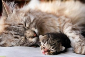 Почему появились кровяные выделения у кошки после родов и лечение