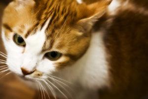 у кошки коричневые выделения из глаз