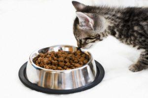 Сравнение сухих кормов для кошек и их рейтинг