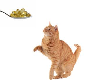 Стоит ли давать рыбий жир для кошек