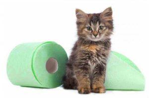 Что можно дать кошке от поноса