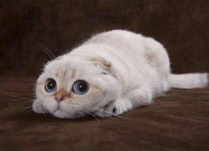 Лечение поноса у кошки