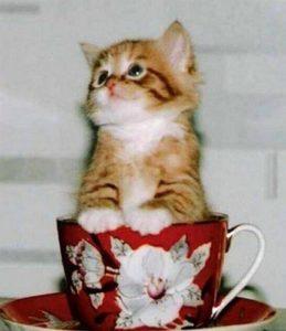 разные повадки кошек
