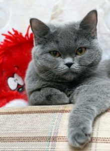 Образ жизни кошачьих