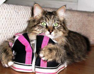 вывести запах кошачьей мочи с обуви