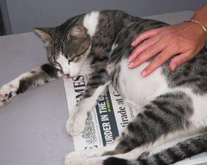 признаки родов у домашней кошки