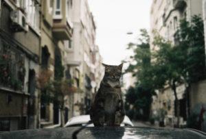 Куда можно деть кошку, если она не нужна?