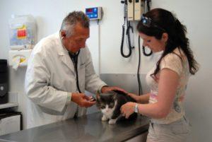 Симптомы и лечение эндометрита у кошек
