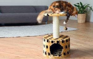 приучить кота к когтеточке