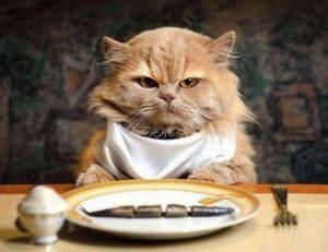 Опасная еда для кошек