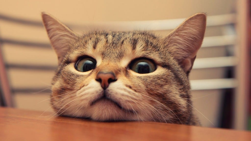 Кота кастрировали как ухаживать