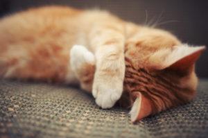 неприятный запах от кошки и как от него избавиться